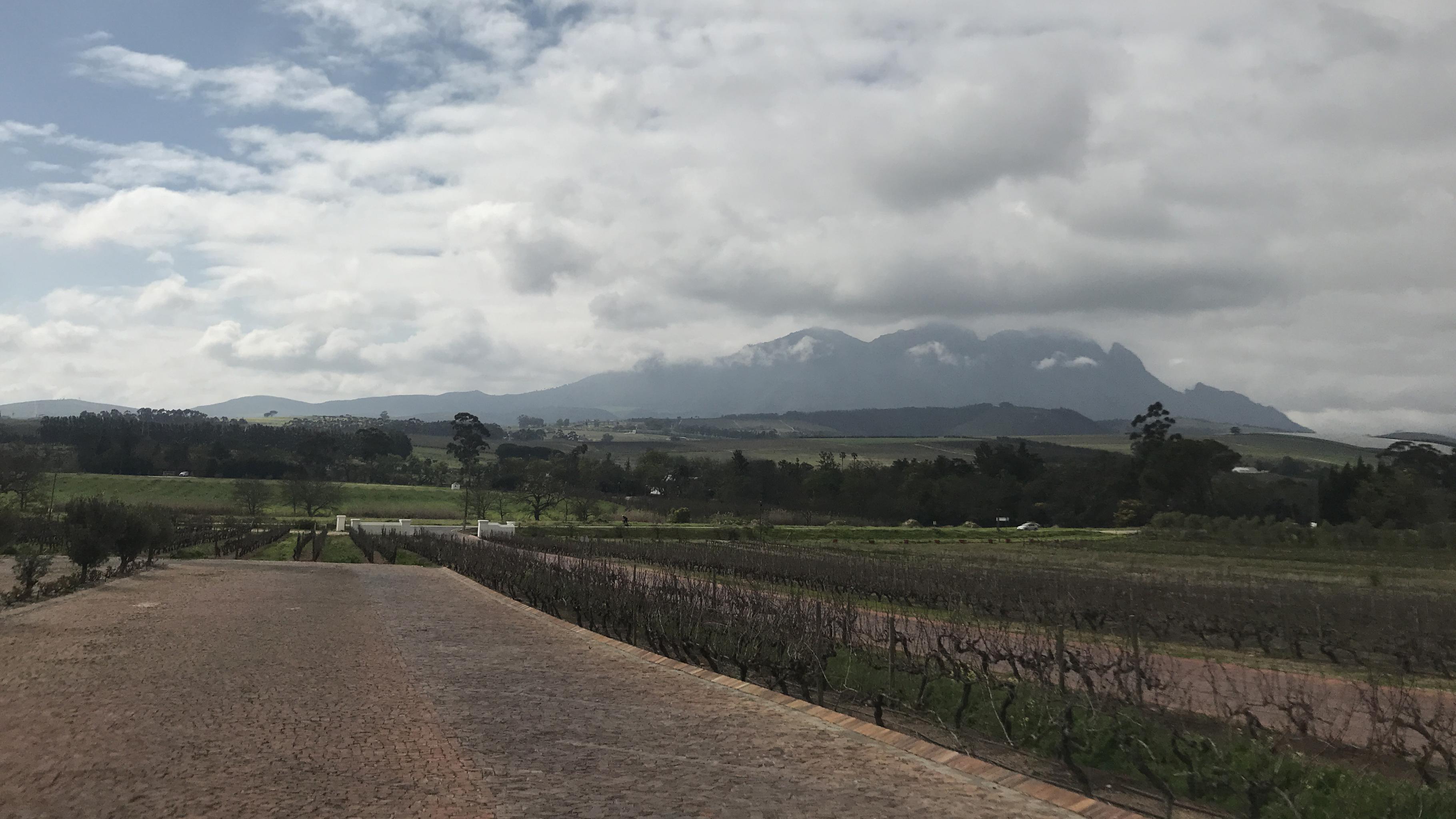 Aktuell ist Winter in Südafrika, die Weinberge sind kahl.